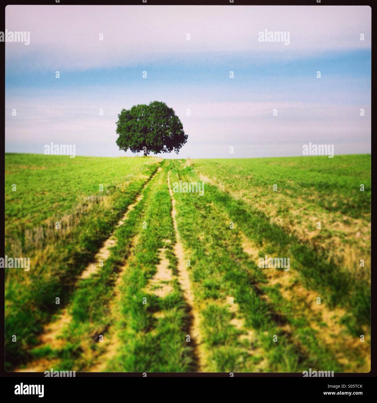 Tree in the meadows. - Stock Image