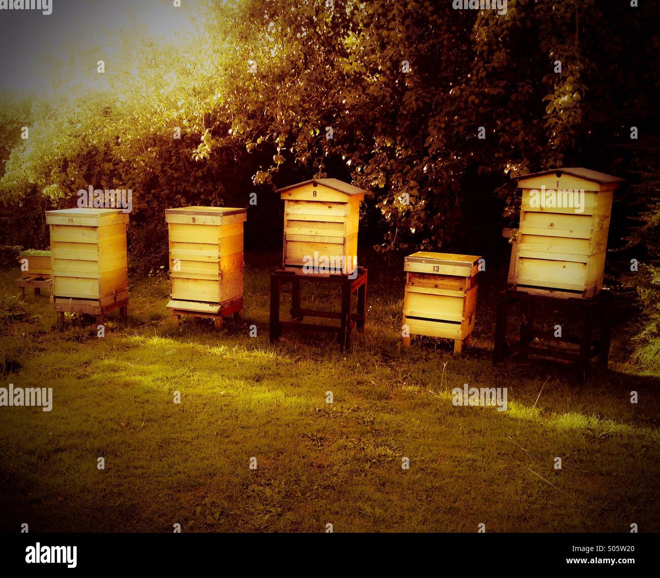 Beehives - Stock Image