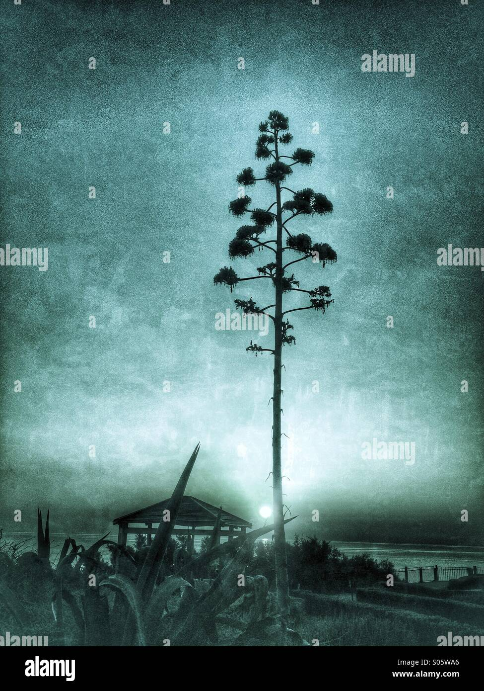 Silhouette of American Agave tree against blue montage sky - Stock Image