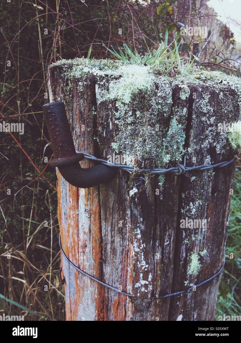 Old fence post - Stock Image