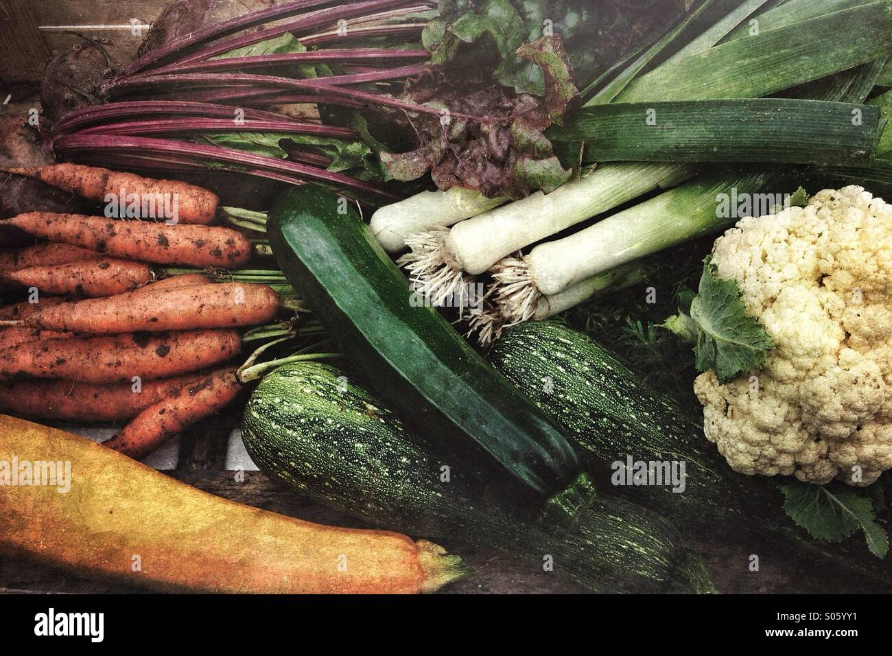 Fresh picked organic vegetables from a home garden - Stock Image