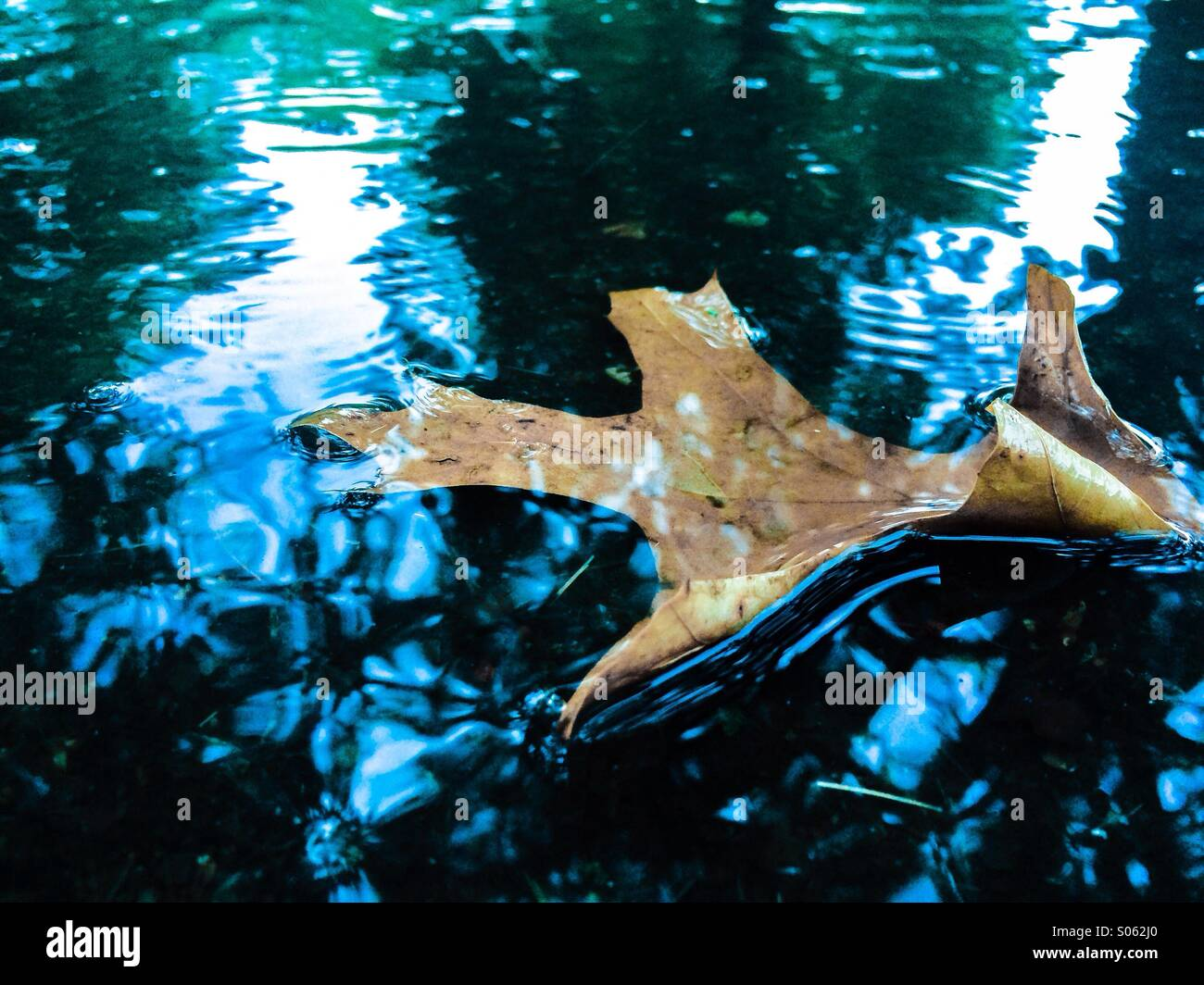 Leaf in puddle - Stock Image