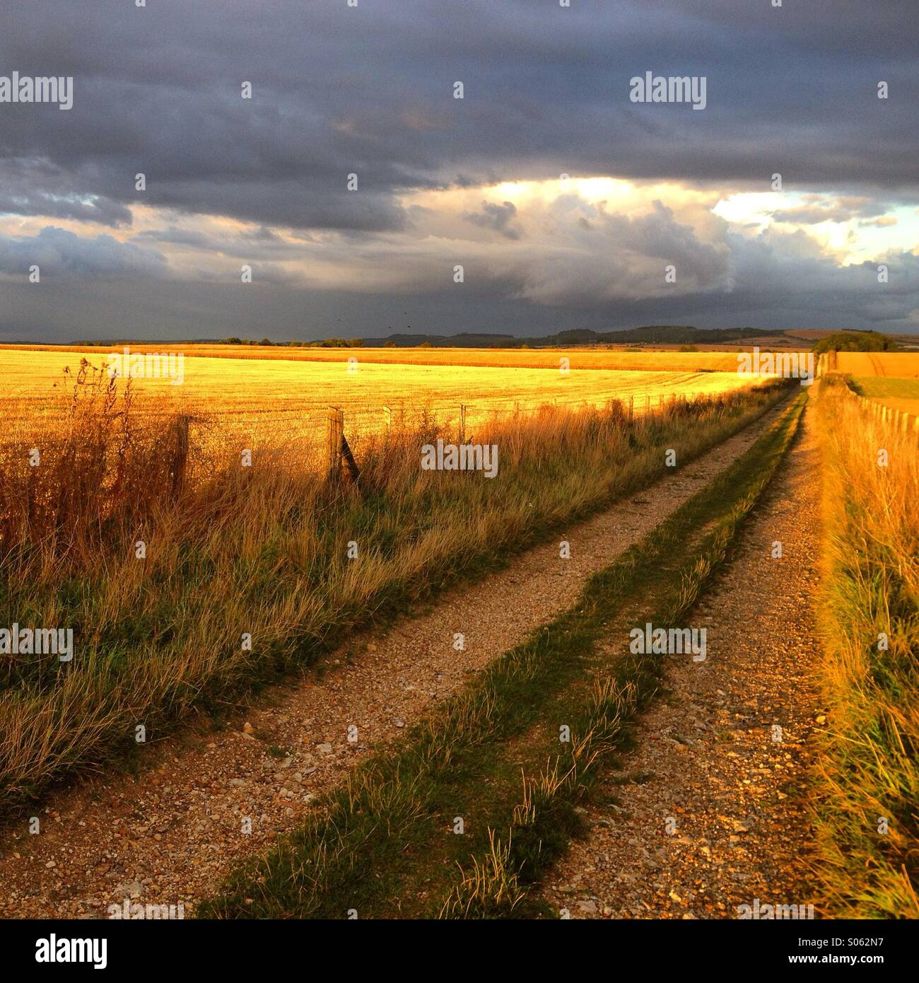 Countryside farm track, Near Amesbury, Wiltshire, England. Dusk. Late Summer 2014. - Stock Image