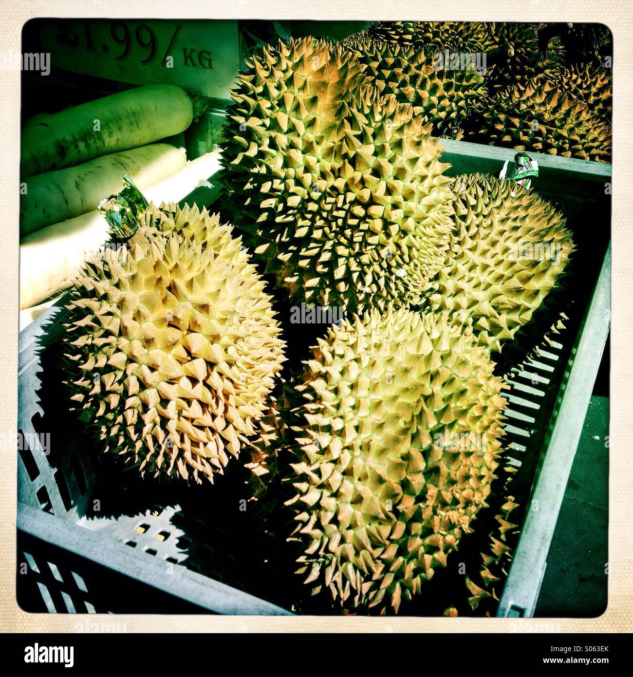 Thai Durian, an oriental fruit with a strong odour. Many people in Southeast Asia regard it as the king of fruit. - Stock Image