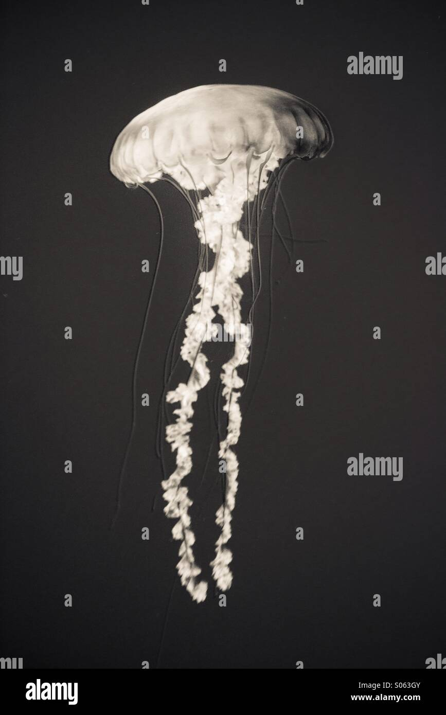 X ray vision - Stock Image