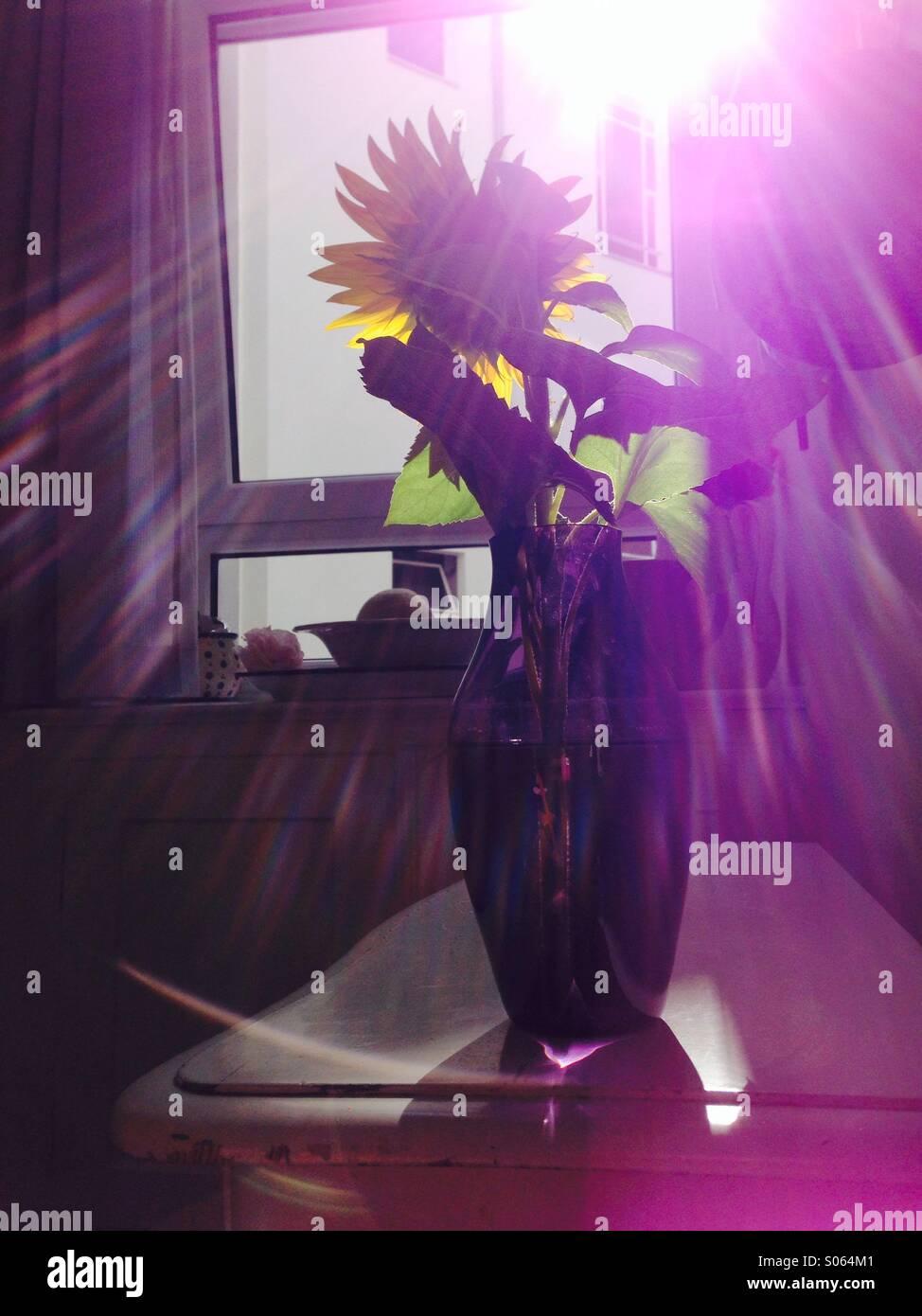 Blume im Sonnenlicht - Stock Image