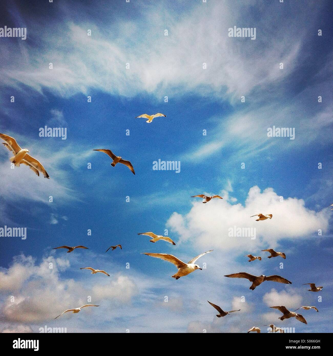 Seagulls flying at the beach. Brighton, England, Europe. - Stock Image