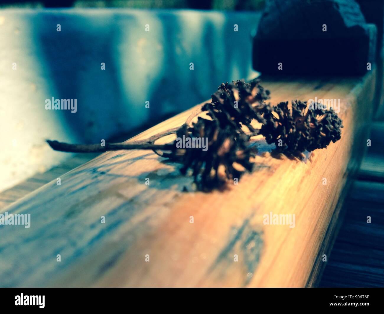 Erlenfrüchte im Ruderboot - Stock Image