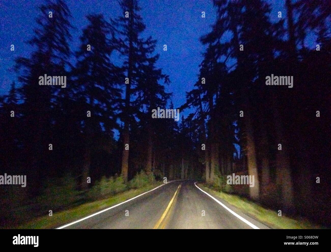 A road through a forest in Oregon is lit by headlights of a car. - Stock Image