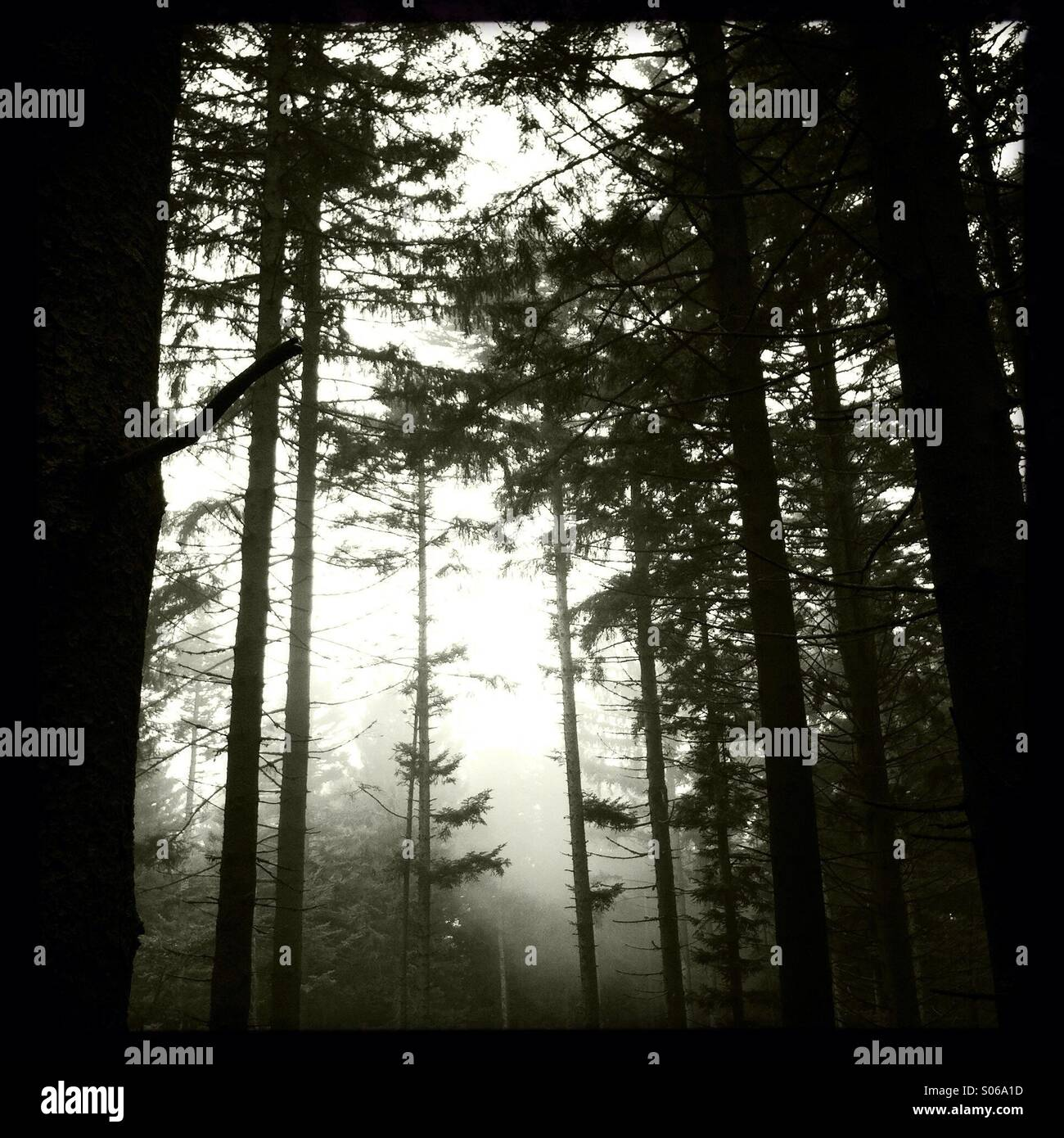 Dramatic atmosphere in the woods - Stock Image