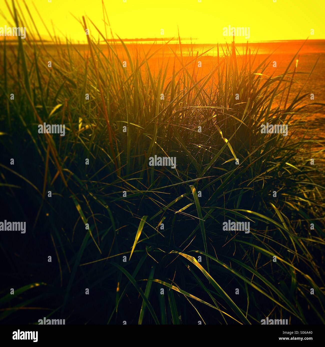 Sea grass by sand dunes on Wirral beach - Stock Image