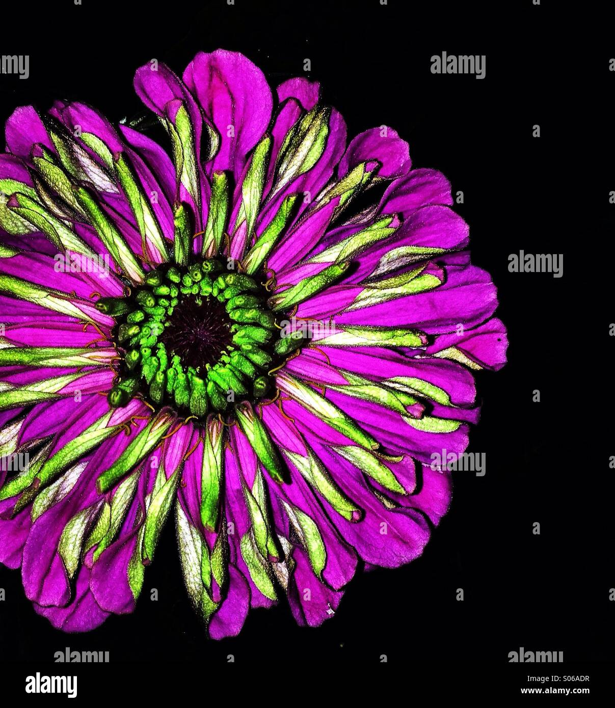 Vibrant flower - Stock Image