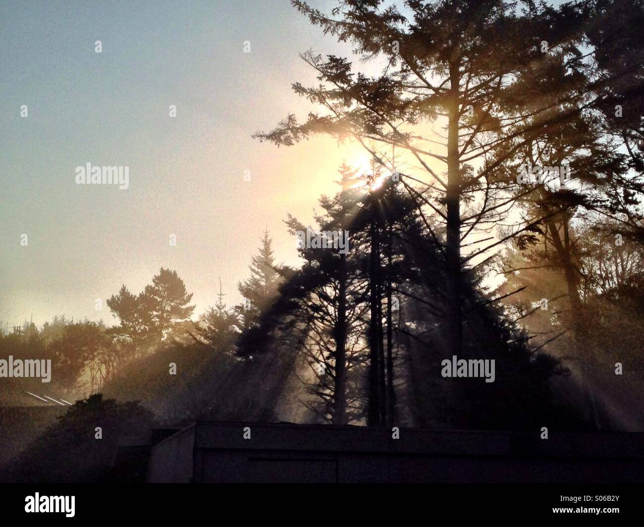 Morning light beams through the mist in the Oregon woods. - Stock Image