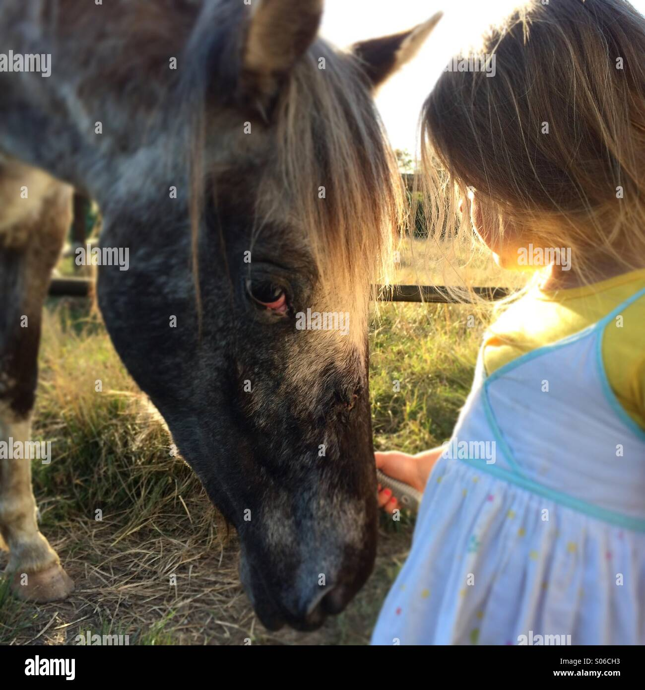 Horse whisperer - Stock Image