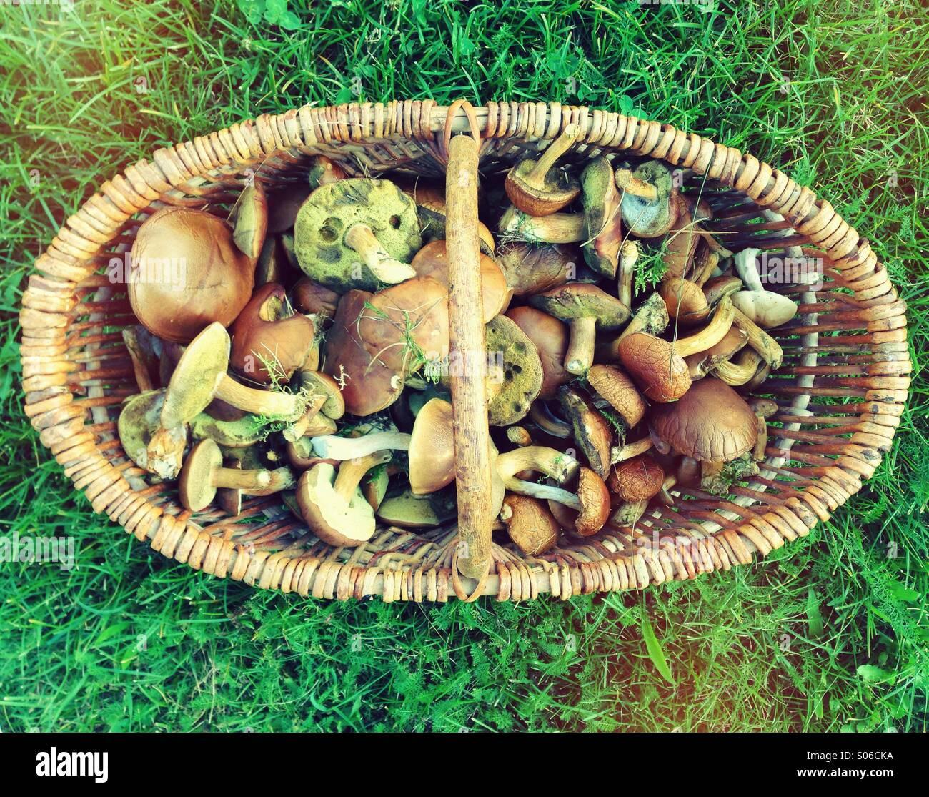 Pilze im Korb Stock Photo