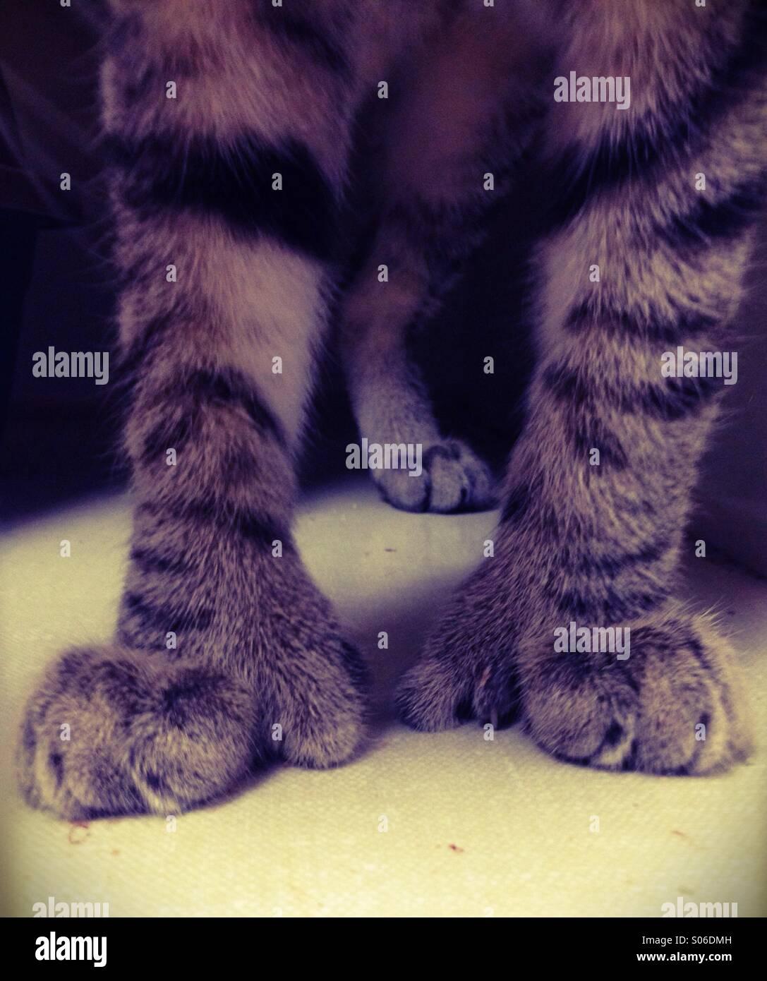 Giant kitten paws - Stock Image