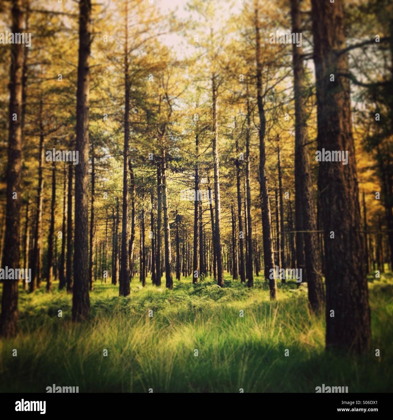 Forest near Tilburg, Brabant, Netherlands - Stock Image