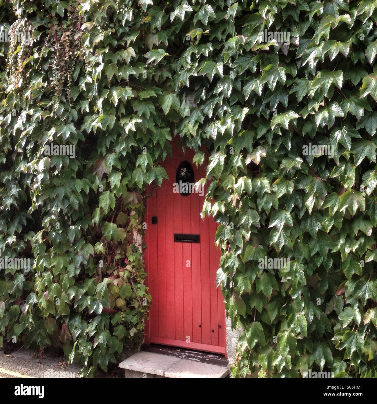 Little red door in ivy covered wall Stock Photo