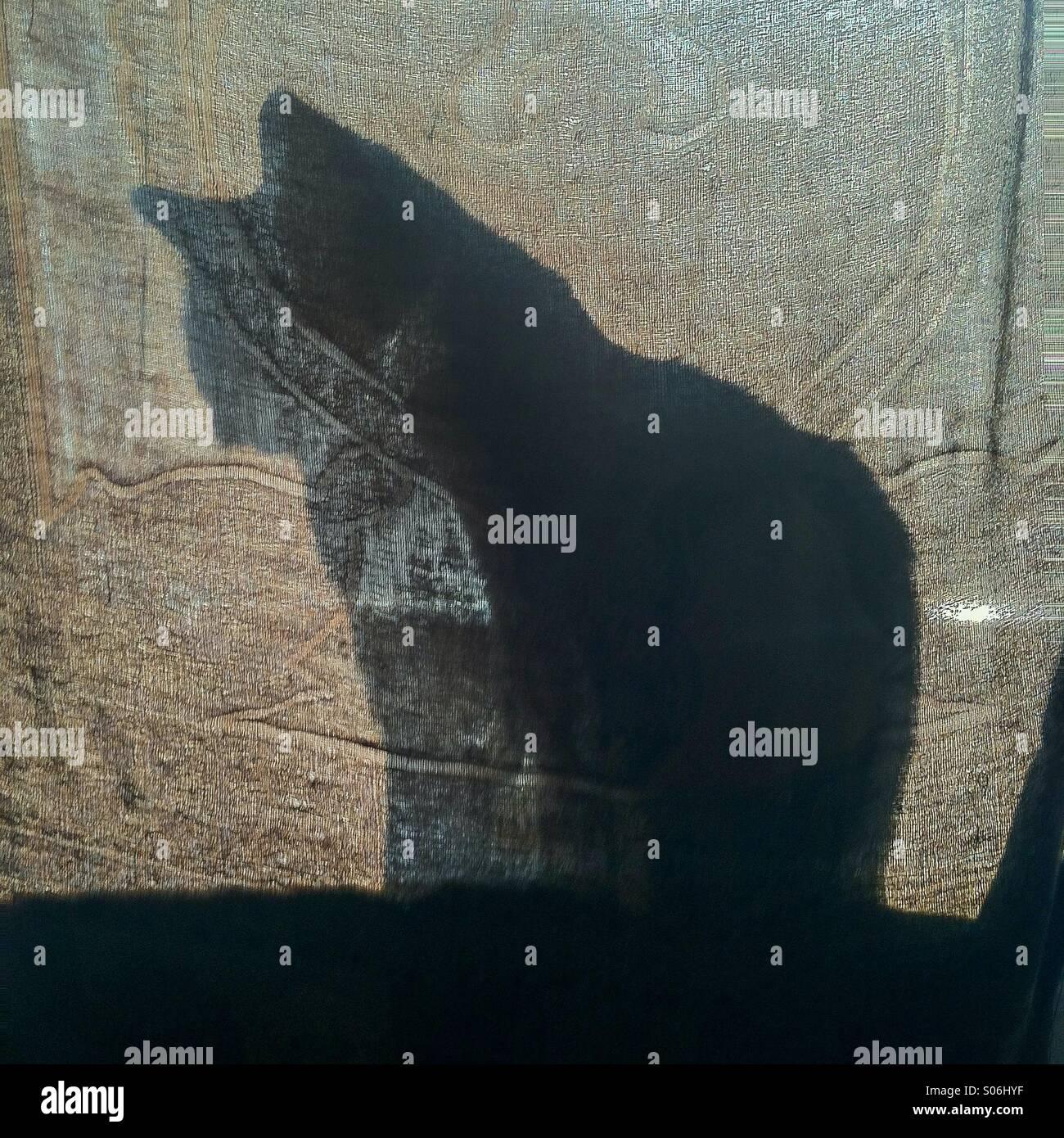 Cat silhouette through fabric - Stock Image