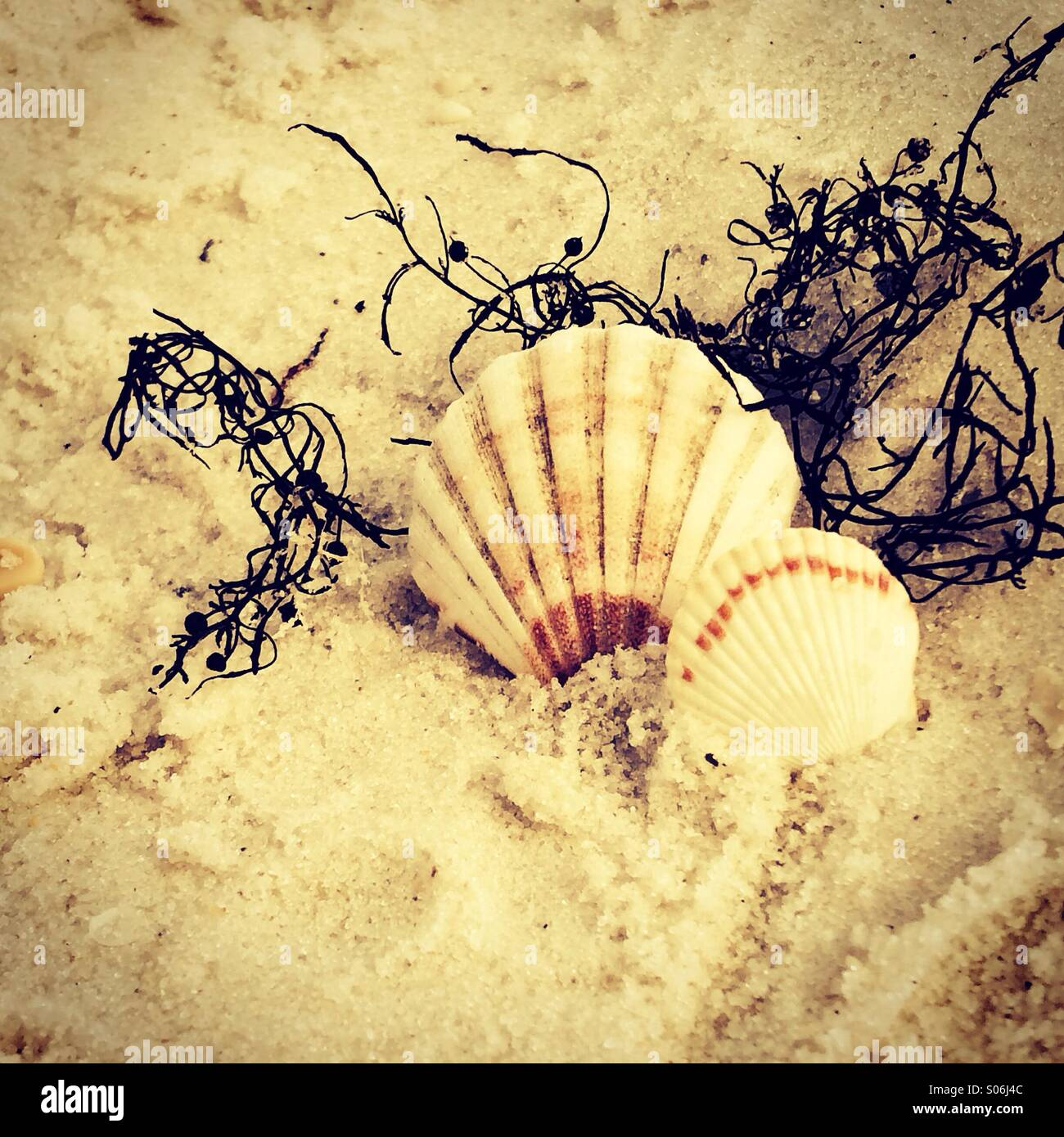Shell dance - Stock Image