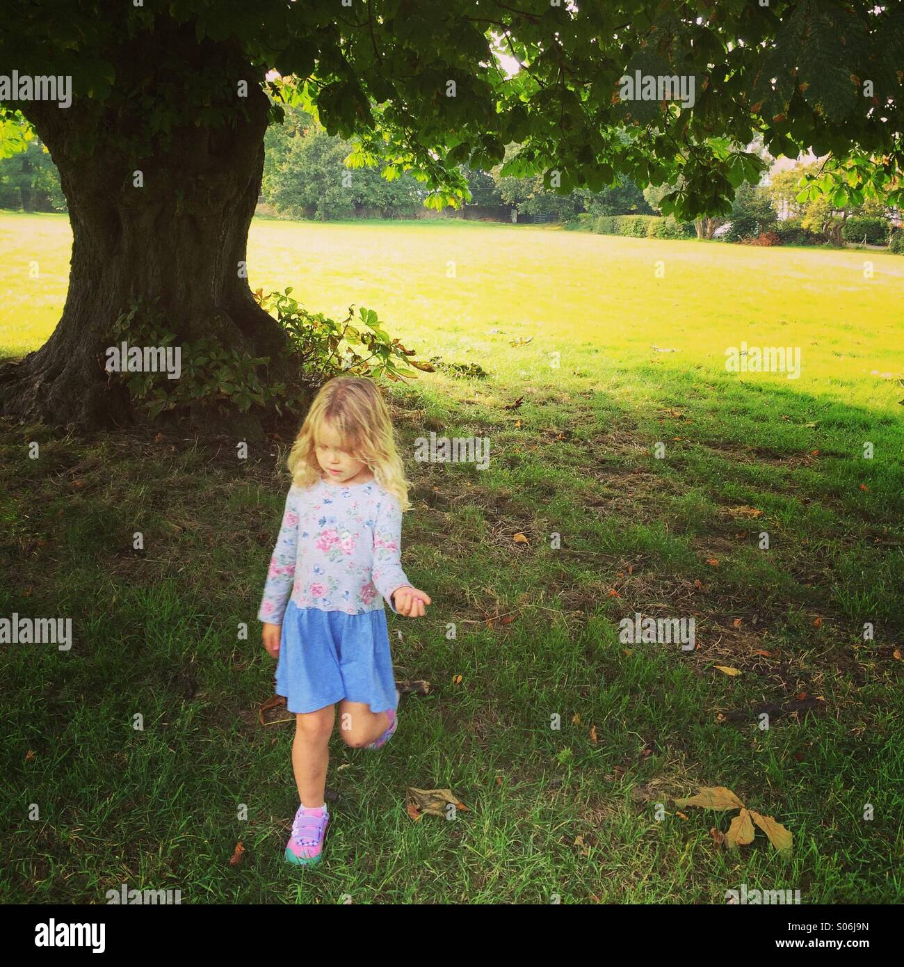 Small girl in a dress walking beneath a chestnut tree - Stock Image