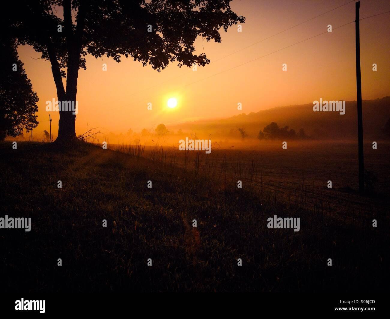 Foggy hayfield - Stock Image