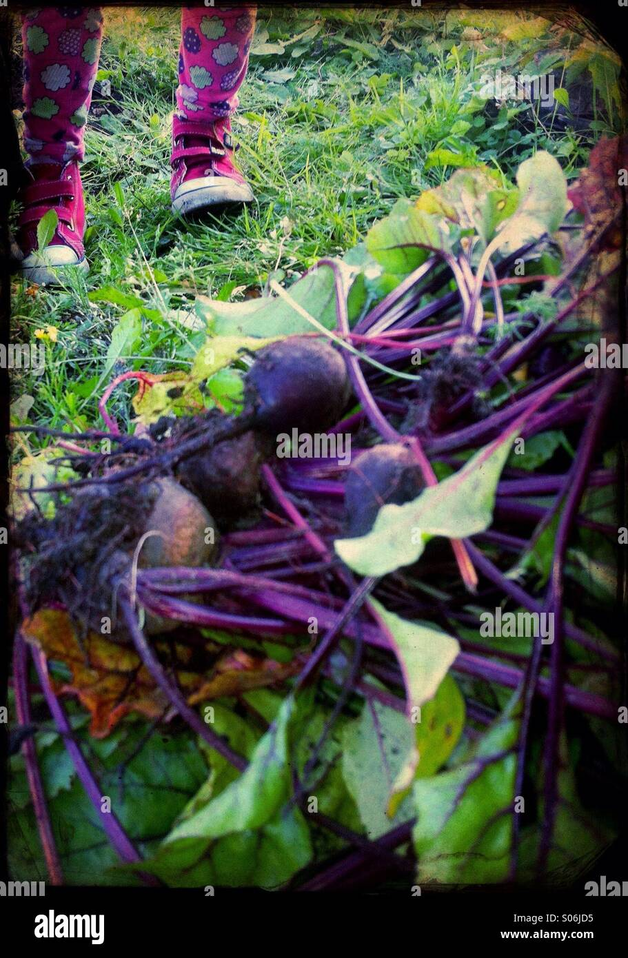 A girl pricked up beetroots Stock Photo