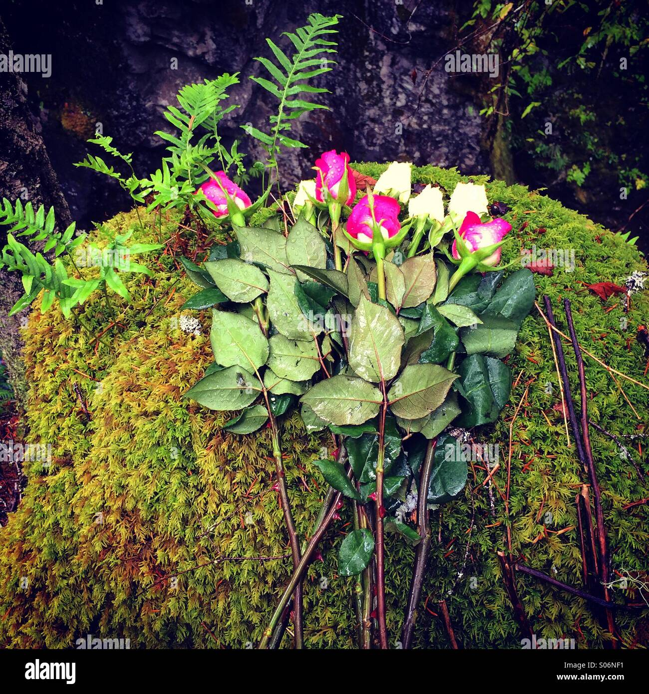 Memorial to accidental death, Little Qualicum Falls Provincial Park, Vancouver Island, Canada - Stock Image