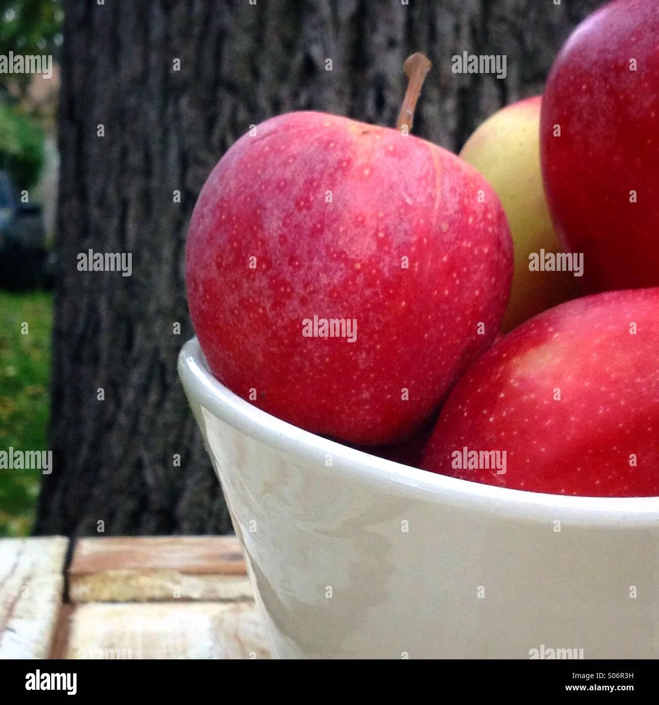 Freshly picked bowl of gala apples - Stock Image