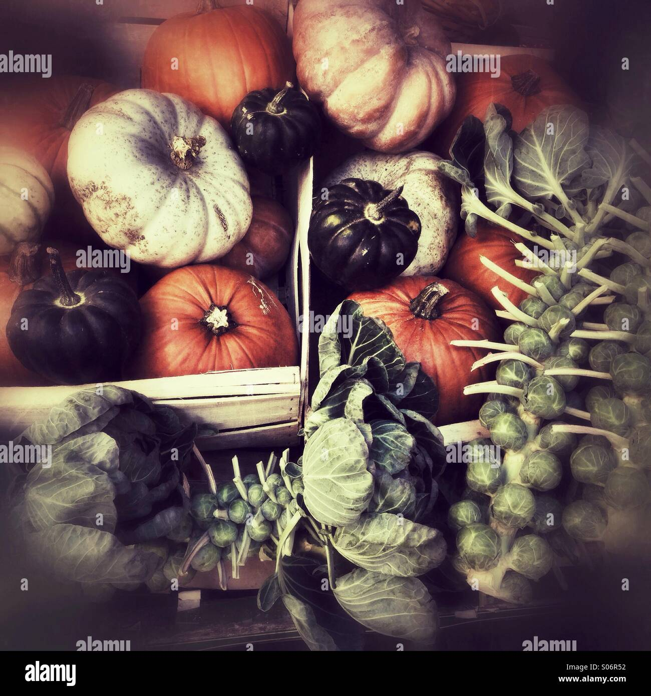 Vegetable display in Clifton, Bristol, squashes and brassicas in autumn Stock Photo