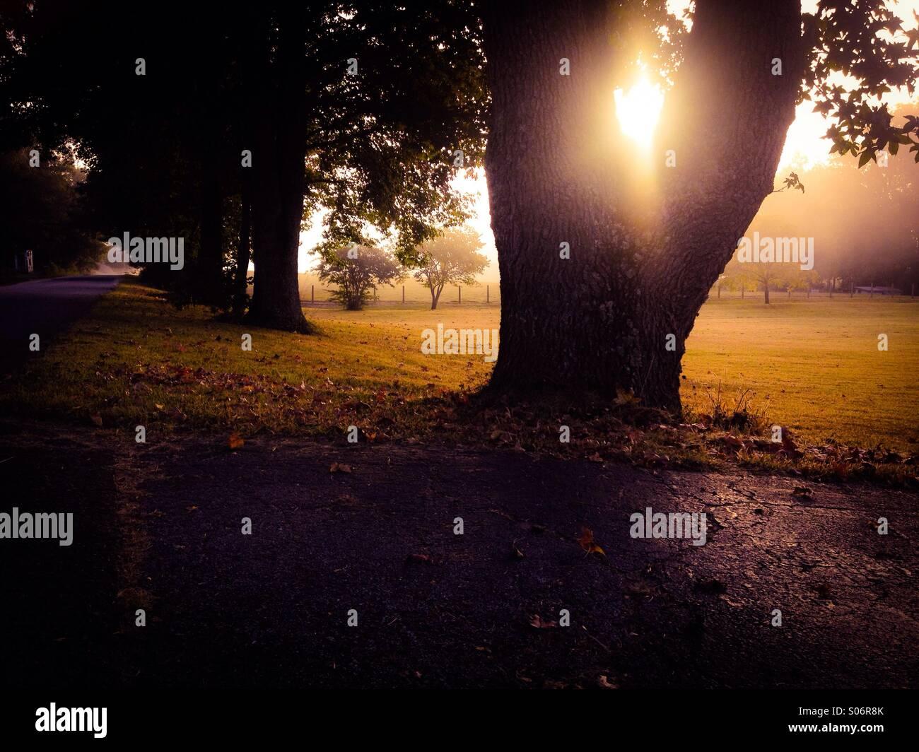 Fall mornings - Stock Image