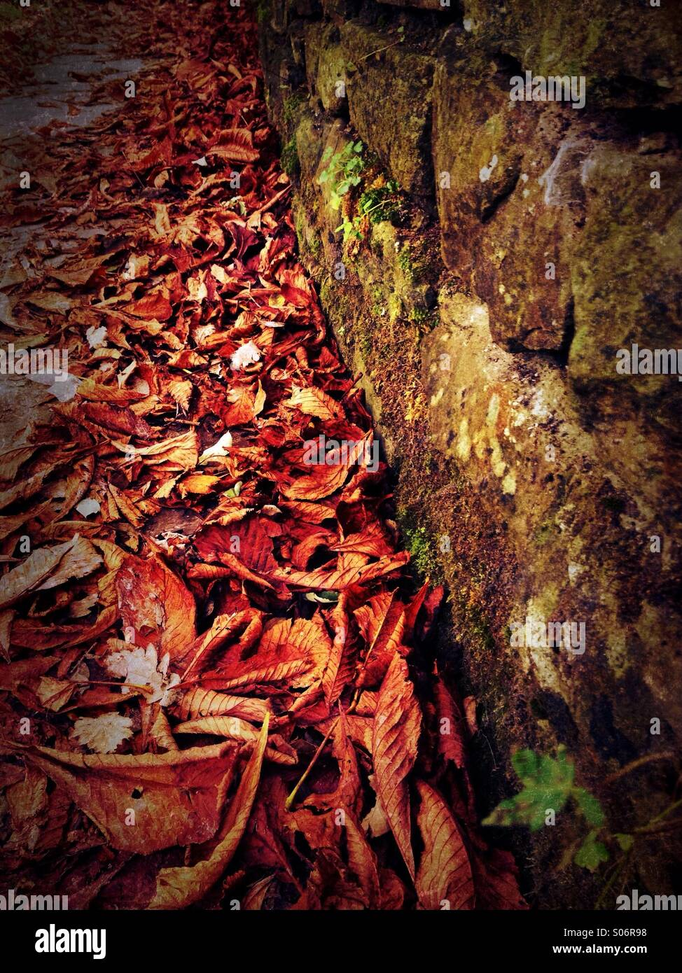 Autumn leaves by moss covered stone wall - Stock Image