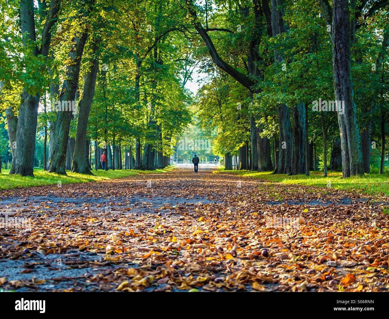 Fall colors in Germany,Gräflicher Park, Bad Driburg, Germany - Stock Image