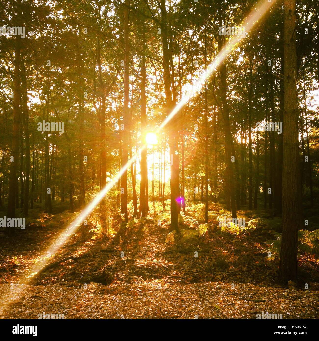Sunlight through the trees - Stock Image