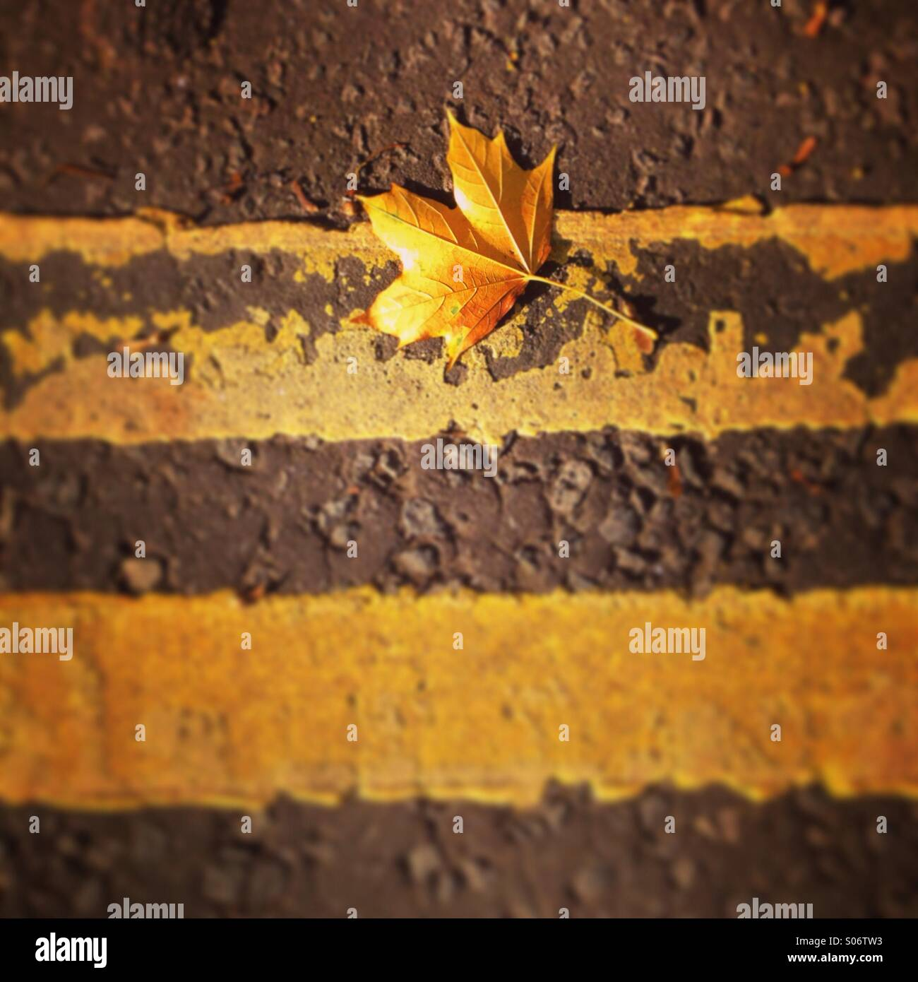 Fallen autumn leaf on double yellow lines. - Stock Image