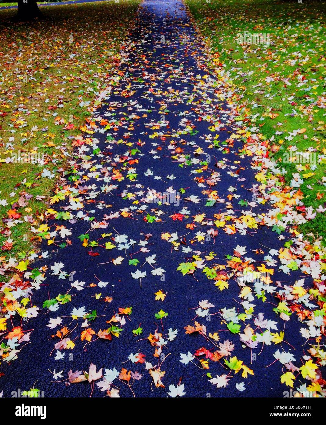 Fallen leaves cover a footpath after a shower of rain in Autumn - Stock Image