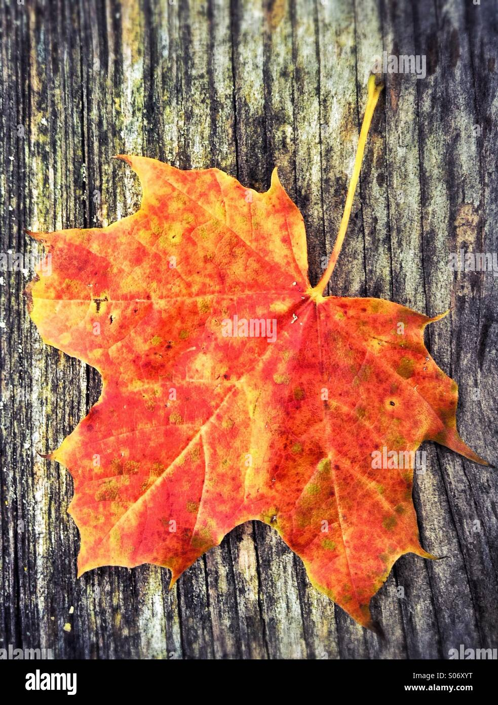 Red leaf in autumnStock Photo