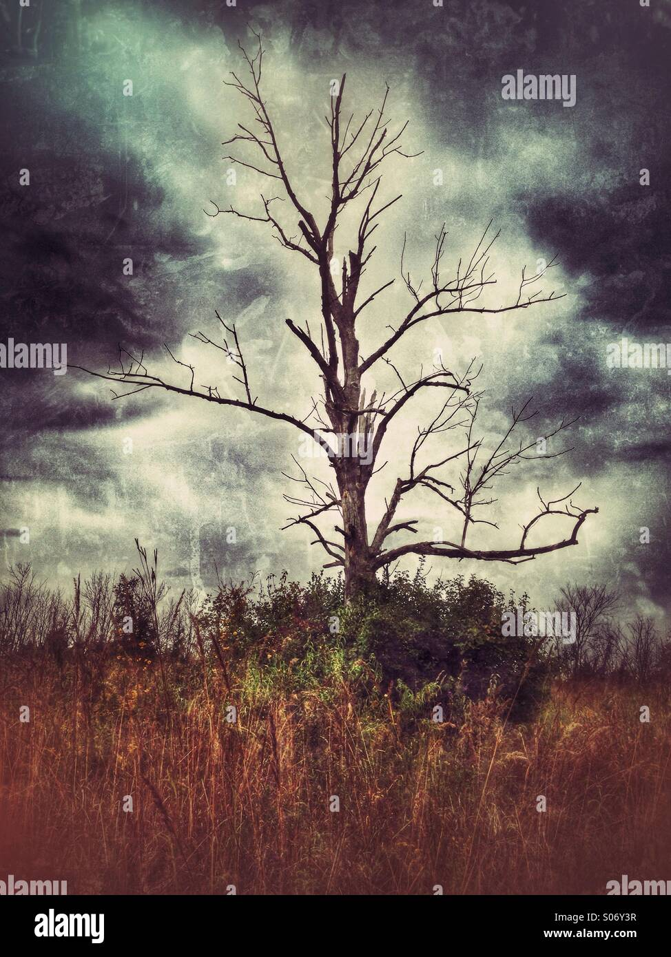 A bare tree against an ominous sky. - Stock Image