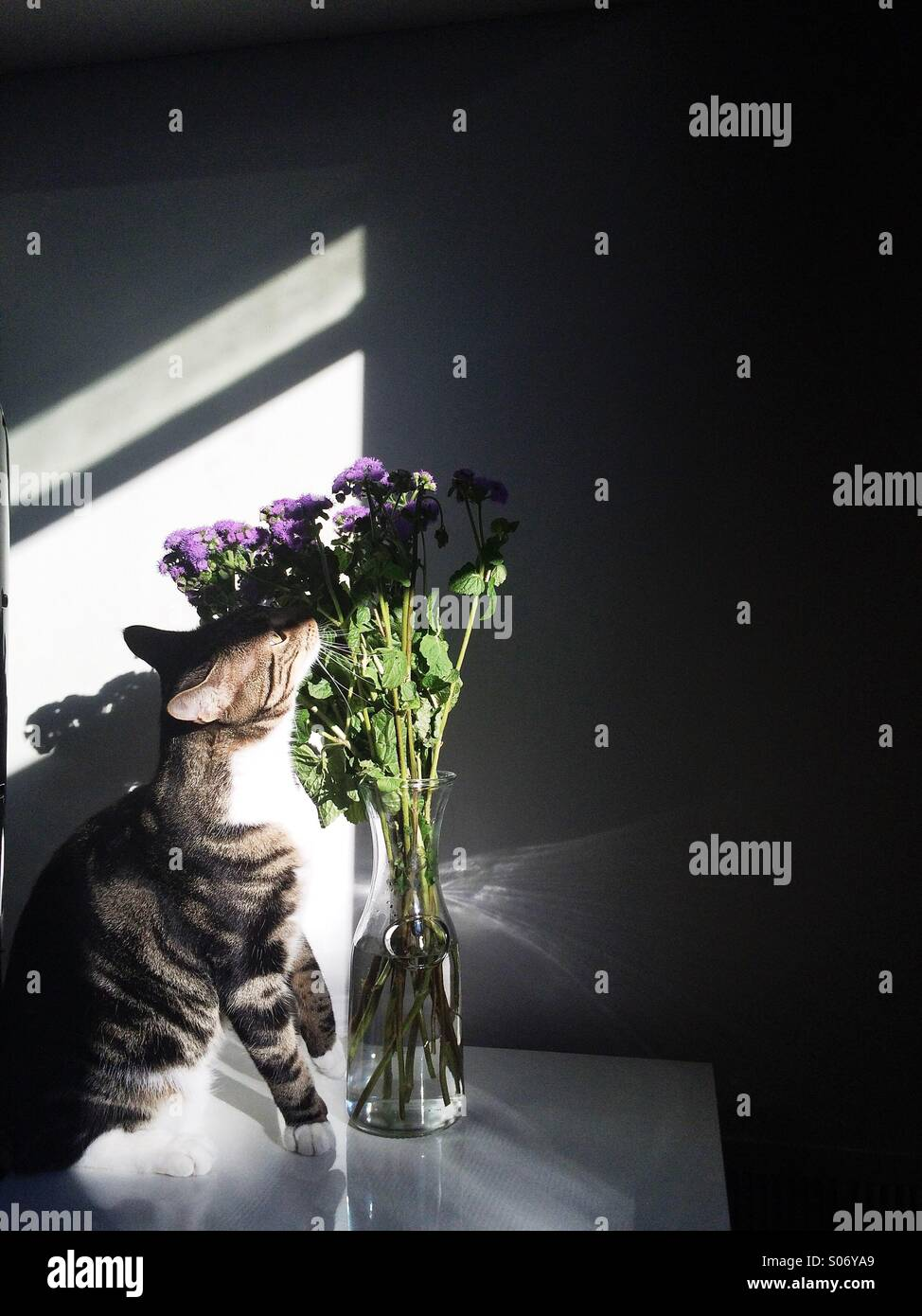 stop and smell the flowers - Stock Image