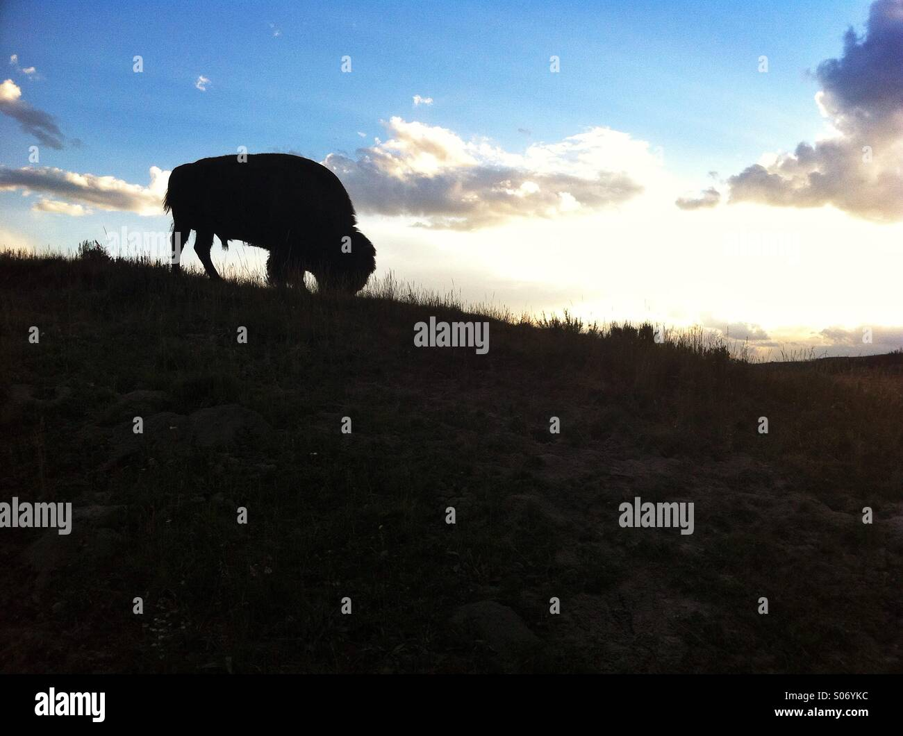 Silhouetted bison on hill - Stock Image