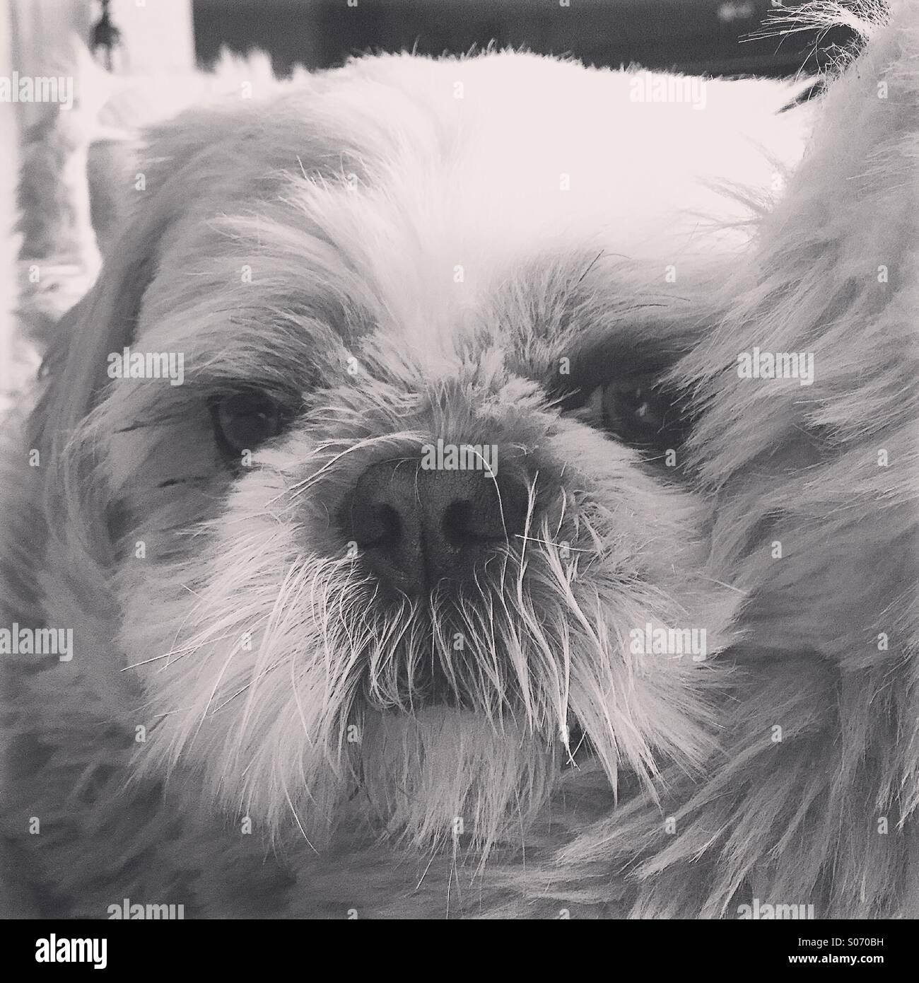 Fluffy dog - Stock Image