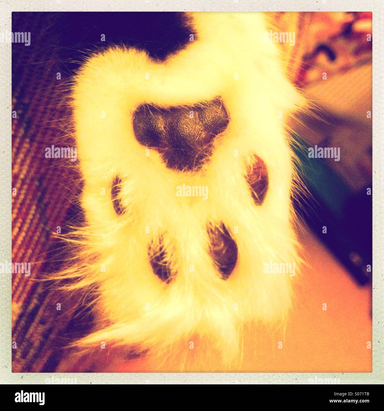 Cats paw - Stock Image