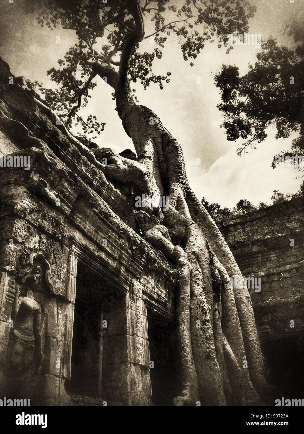Ta Prohm temple Cambodia, location of Lara Croft Tomb Raider movie - Stock Image