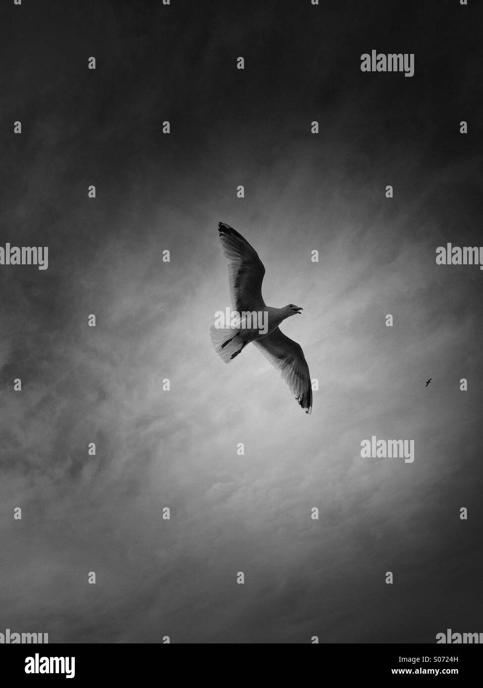 The seagull - Stock Image