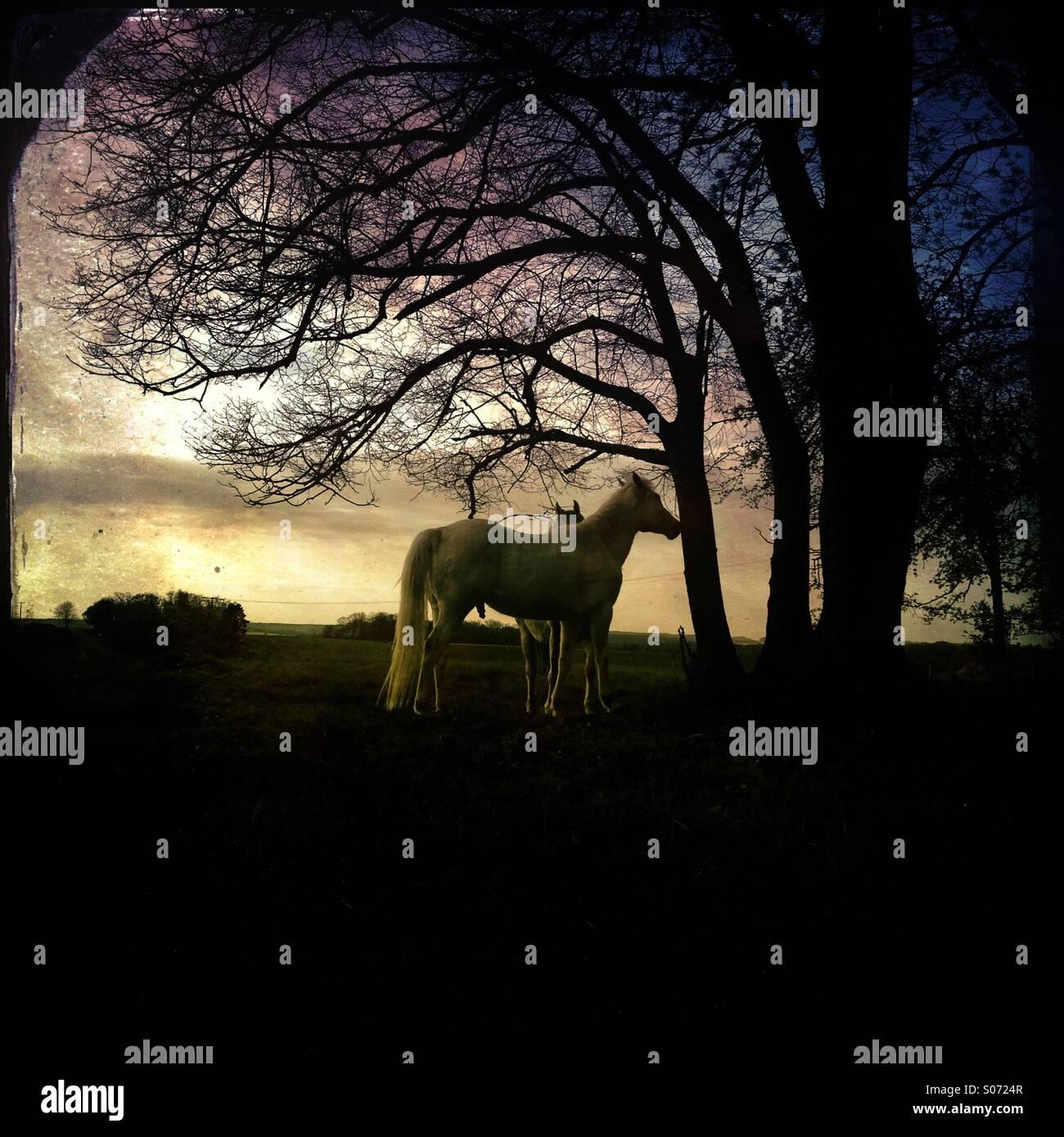 Horses - Stock Image