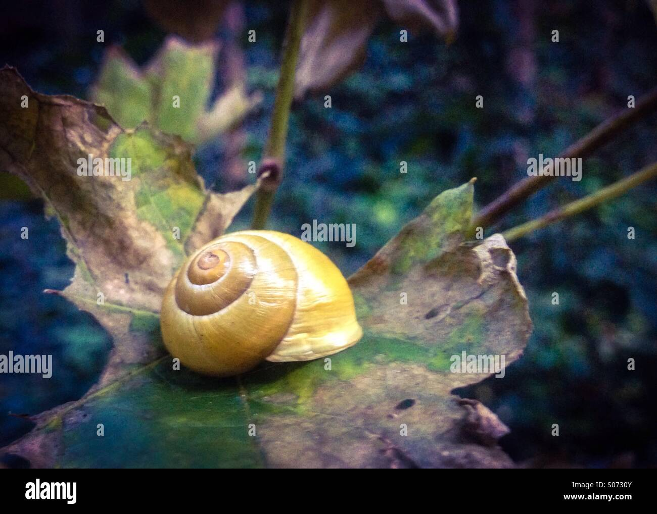 Yellow snail on a leaf. - Stock Image