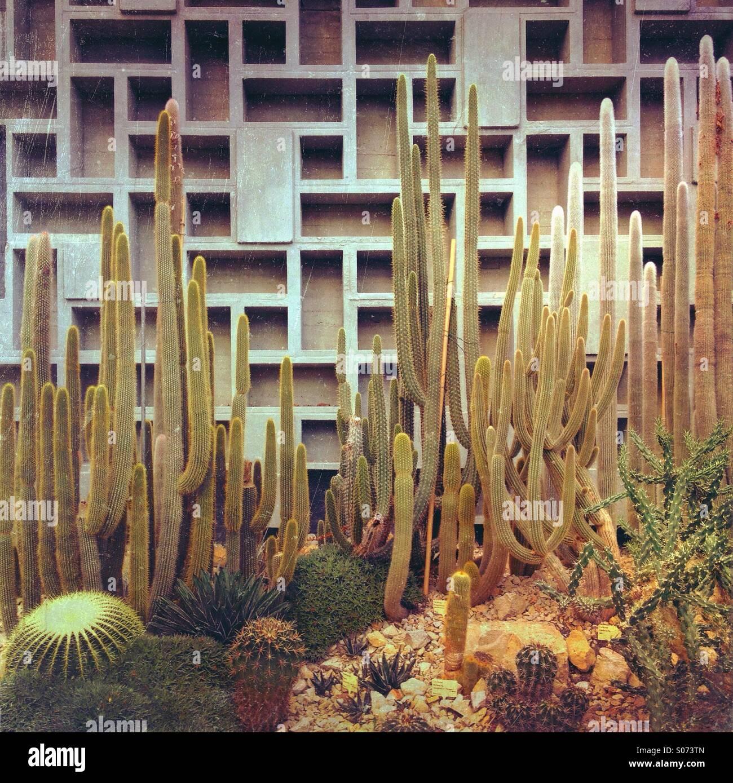 Cactus growing in an arid greenhouse at Planten und Blumen botanical gardens, Hamburg, Germany - Stock Image