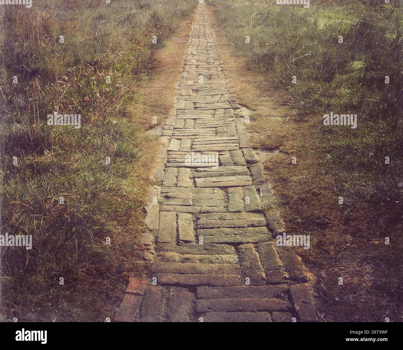 Brick path through grassy field - Stock Image