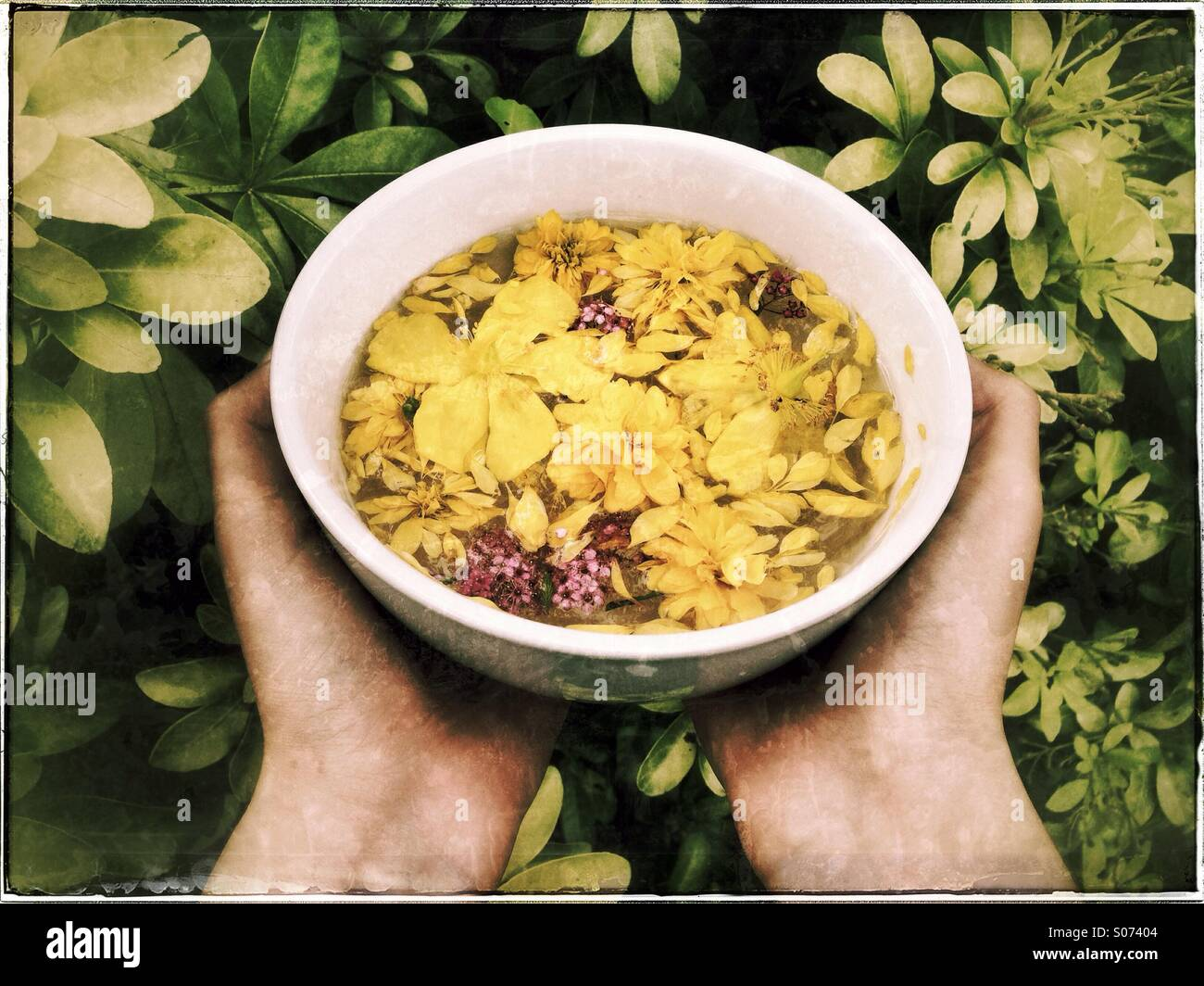 Bowl with flower petals - Stock Image