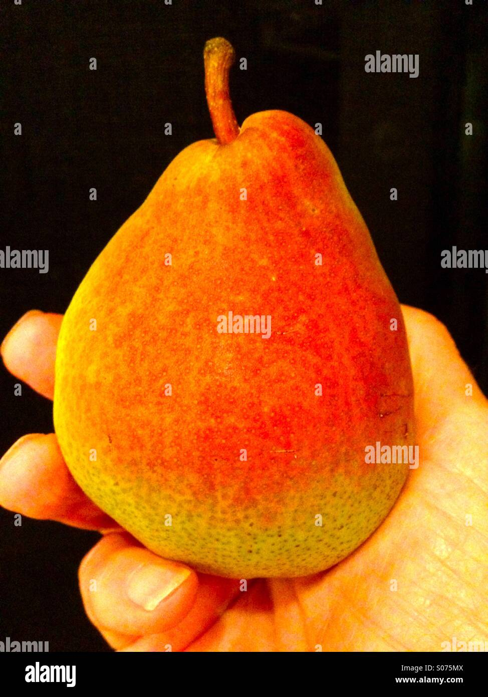 Colorful ripe pear in hand - Stock Image